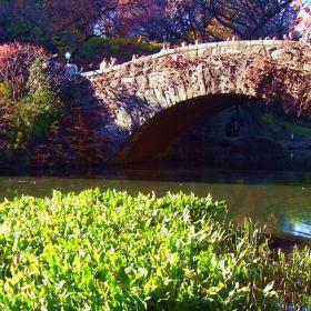 Central Park - November 2010