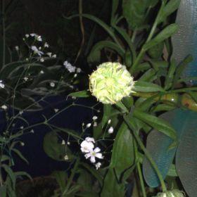 Plants & Nature