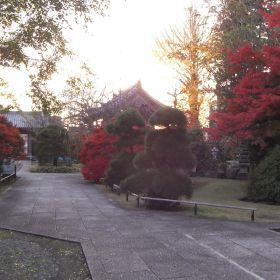(temp) 祇園寺 2012.11.25