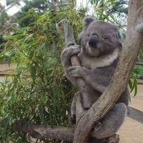 Australia March 2013