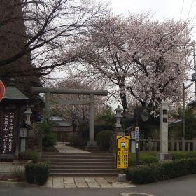 (temp) 花 @ 水戸 八幡宮 2013.03.30