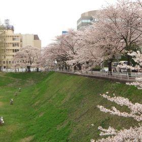 (temp) 桜 @ 旧水戸城 堀跡 2013.04.06