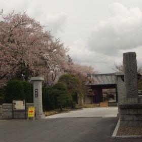(temp) 桜 @ 祇園寺, 水戸 2013.04.06