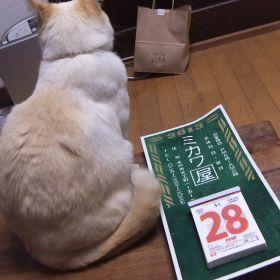 (temp) 2013.04.28 水戸-益子 陶器市