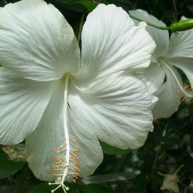 fleurs, flowers