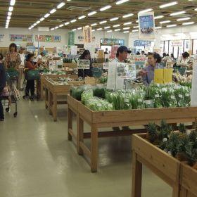 (temp) 2013.05.03 04.farmer's market ゆらてぃく市場 石垣店