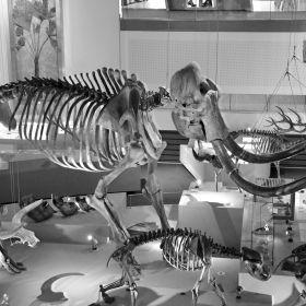 Mammuthus 3D
