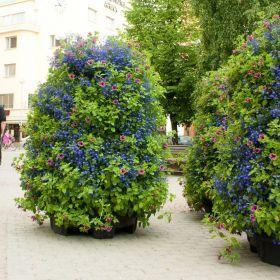 Oulu town, Finland