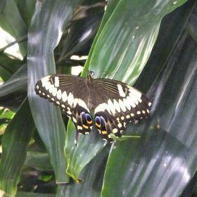 Butterflies - Natural History Museum - DC