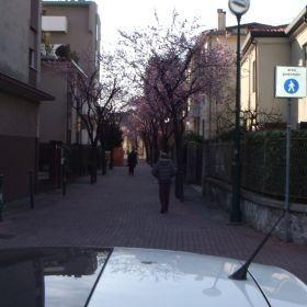 Via Felisati in fiore