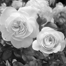 Flowers Bedford