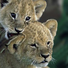 Wildlife (2)