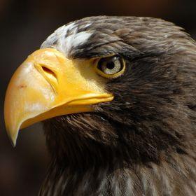 Eagles park