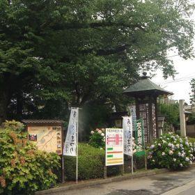 !あじさい祭り@水戸八幡宮 2014.07.19