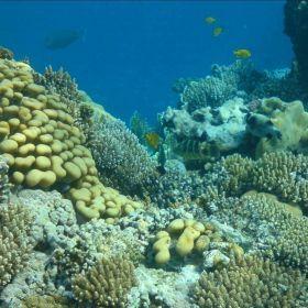 2008 Egypt, Dahab, diving
