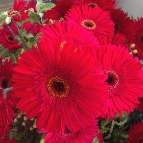 Flowers & zoe