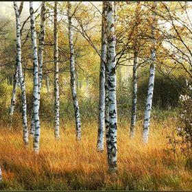 ... Autumn ...