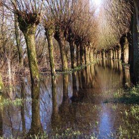 Dordrecht Biesbosch