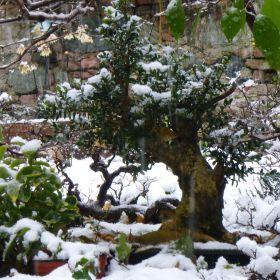 giardino e neve