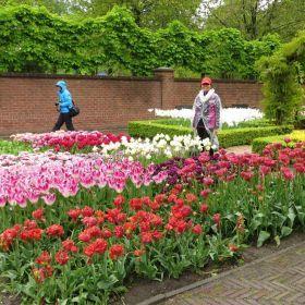 Tulip Garden 16 May 2015 Keukenhof