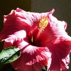 hibiscus & bug