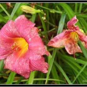 Fleurs Divers, PA_USA