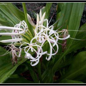 PA_Botanic Garden_Cha Cha_2015