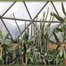 Cacti of Rama IX park