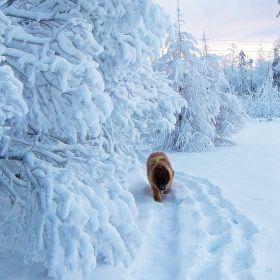 ... Wintertime ...