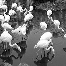 Blijdorp Zoo Rotterdam 2016 3D