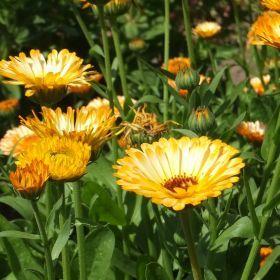Flowers - Цветы
