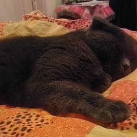 Our cat, Mosya in 3D(Наша кошка,Мося в 3D)