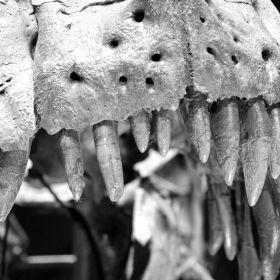 T.Rex Naturalis Leiden 3D