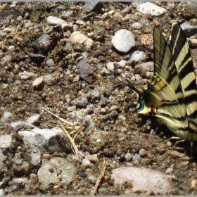 Papillons, papillons de nuit, chenilles/Butterflies, Moths, caterpilars
